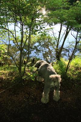 クンクン池のニオイがしゅる